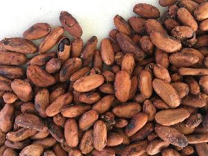 Von der Bohne bis zur Tafel: Slow Food lädt zur Schokoladen-Verkostung ein